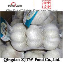 organic garlic Chinese fresh garlic