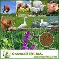 alfalfa samen zum verkauf