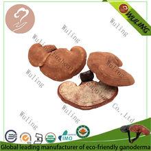 ganoderma mushroom herbal medicine