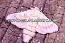 100% natural medicine,food grade Male Silk Moth Extract