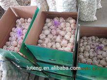 2014 fresh normal white garlic in carton