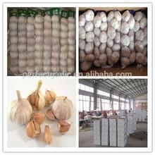 China 2014 Jinxiang Fresh 5.5cm Garlic, China white garlic Factory