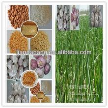 KOSHER/ HALAL/ GAP Pure White Garlic in New Season