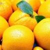Citrus(China honey mandarin)