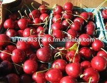 Turkey fresh cherries