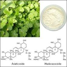 10%-80% Asiaticoside/Madecassoside Extract of Centella Asiatica
