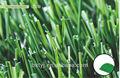 Nuevo u- en forma de hierba artificial para los deportes