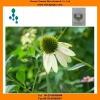 Echinacea extract powder 4% UV herbal extract,natural echinacea extract powder,echinacea polyphenols