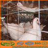 Hot-sale metal pigeon breeding cage ( ISO9001 sell12@innaer.com)