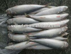 2014 prices frozen mackerel fish fresh Mackerel seafood