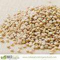 Convencional blanco QUINUA grano de perú Andes - QUINUA BLANCA Convencional de los Andes Peruanos