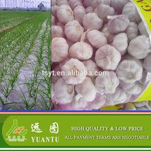 2014 Chinese Fresh Garlic Hot sale Normal White and Pure White