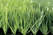 Synthetic grass for football/soccer pitch