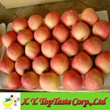 Paper Bagged 100/113/125 20KG CARTON Yantai Fuji Apple