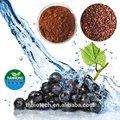 Fabricante pure natural de semente de uva extrato/de semente de uva extrato pó/orgânica de sementes de uva extrato