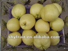 Supply chinese fresh su pears
