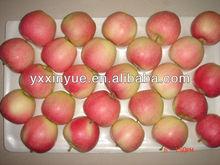 Red Gala Apple