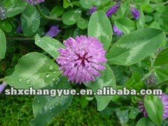 Top quality Isoflavones 8% HPLC Red Clover Extract