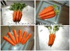 2013 red new carrot vegetables rich vitamin b