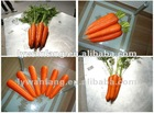 2014 red new carrot vegetables rich vitamin b