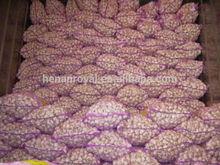 Mesh bag packaged natural fresh garlic