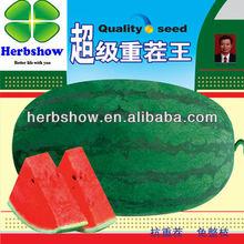 Newly F1 Hybrid Super big Watermelon seeds for planting