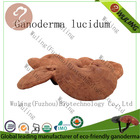 High quality red reishi mushroom