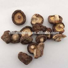 Vegetales deshidratados toda Shiitake Mushroom