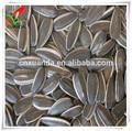 Venta al por mayor china semillas de girasol precio tipo 5009 24/64