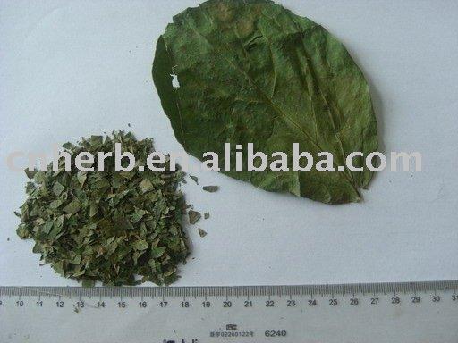 Caqui folha ( Folium Kaki ) / ervas