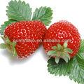 100% naturel de fraise fruits poudre