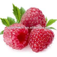 bulk Raspberry extract 10:1