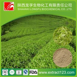Best quality organic green tea extract