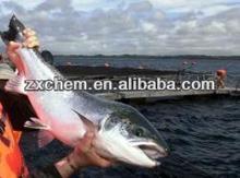 Halal Wheat Gluten for fish feed