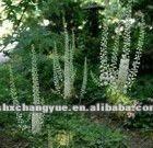 Natural Black Cohosh extract Triterpenoid saponins