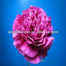 Fresh cut single head carnation