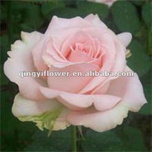 types of fresh cut flower