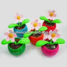 Solar Apple Flower