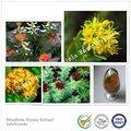 fabricación y suministro de alta calidad de extracto de rhodiola rosea rosavin en a granel