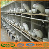 cage rabbit cage with rabbit farming equipment