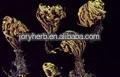 Herba Selaginellae Extract Powder