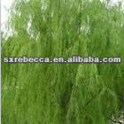 15% 25% 50% 98% salicin/White willow extract/CAS 84082-82-6