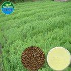 Pure Natual High Quality Flax Seed /Flax lignans, SDG