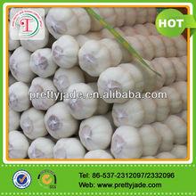 chinese fresh white garlic