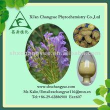 pure natural radix scutellariae extract