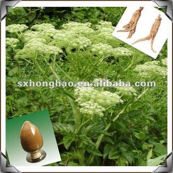 Ligustilide 0.6%-1% HPLC Yellow Brown Powder Dong quai extract
