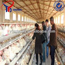 Cheap bird cages/chicken breeding coop cage/welded chicken cage wire mesh for sale