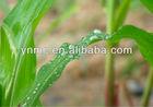 P 18% SSP single super phosphate fertilizer for farm crops CAS: 10031-30-8