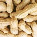 Graines d'arachide