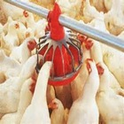 poultry feeds chicken feeds food additive for animal